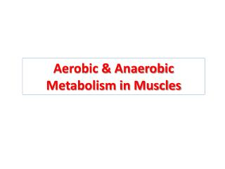 Aerobic  Anaerobic Metabolism in Muscles