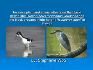 Invasive plant and animal effects on the black-netted stilt Himantopus mexicanus knudseni and the black-crowned night he