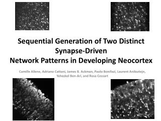 Sequential Generation of Two Distinct Synapse-Driven Network Patterns in Developing Neocortex