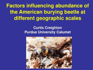 Factors influencing abundance of the American burying beetle at different geographic scales  Curtis Creighton Purdue Uni
