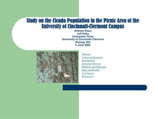 study on the cicada population in the picnic area of the university of cincinnati-clermont campus andrew stacy jeff kirb