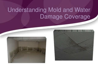 Understanding Mold and Water Damage Coverage