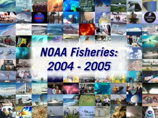 NOAA Fisheries: 2004 - 2005