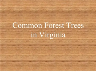 common forest trees in virginia