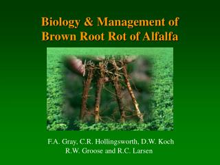 Biology  Management of  Brown Root Rot of Alfalfa