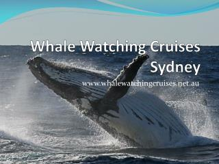 whale watching cruises sydney - special offer