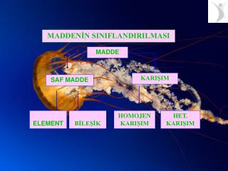 SAF MADDE: Ayni cins atom yada molek llerden olusmus maddelere saf madde denir.  R. Elementler saf maddelerdir.    nk ;