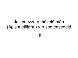 Jellemezze a m zelo m h     Apis mellifera  v rusbetegs geit