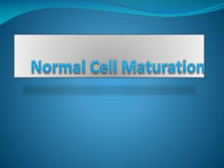 Normal Cell Maturation