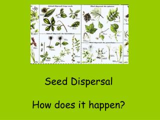 seed dispersal   how does it happen