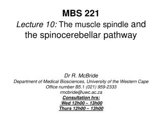 MBS 221 Lecture 10: The muscle spindle and the spinocerebellar pathway     Dr R. McBride Department of Medical Bioscienc