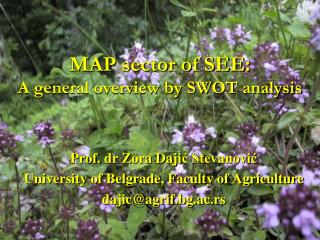 MAP sector of SEE:  A general overview by SWOT analysis