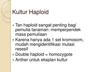 Kultur Haploid