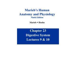 Chapter 23 Digestive System Lectures 9  10