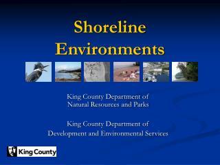Shoreline Environments