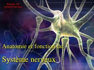 Anatomie et fonction du Syst me nerveux