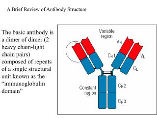The basic antibody is a dimer of dimer 2 heavy chain-light chain pairs composed of repeats of a single structural unit k