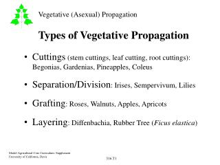 Types of Vegetative Propagation