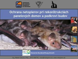 Ochrana netopierov pri rekon trukci ch panelov ch domov a podkrov  budov