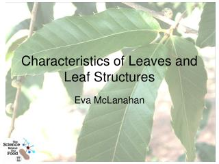 Characteristics of Leaves and Leaf Structures