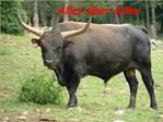 Rinderrassen Weltweit wird zwischen etwa 500 verschiedene Rinderrassen unterschieden... Hier eine kleine  bersicht der -