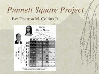 Punnett Square Project
