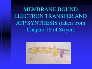 MEMBRANE-BOUND ELECTRON TRANSFER AND ATP SYNTHESIS taken from Chapter 18 of Stryer