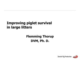 Improving piglet survival  in large litters
