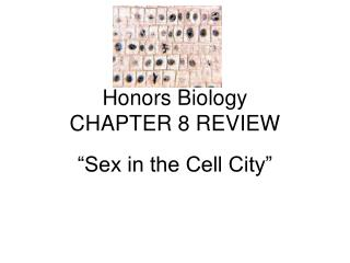 Honors Biology CHAPTER 8 REVIEW