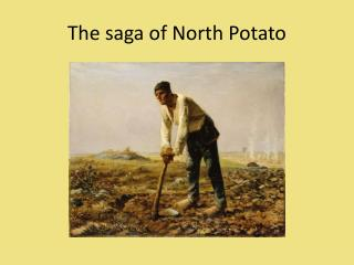 The saga of North Potato
