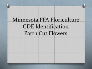 Minnesota FFA Floriculture CDE Identification Part 1 Cut Flowers