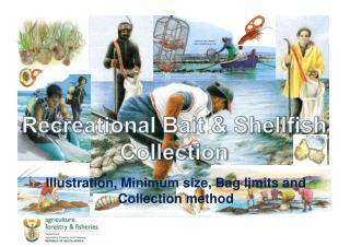 Recreational Bait  Shellfish Collection