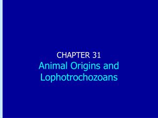 Chapter 31: Animal Origins and Lophotrochozoans