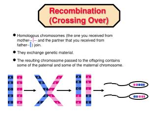 Homologous chromosomes the one you received from mother--  -- and the partner that you received from father--   join.