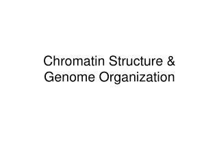Chromatin Structure  Genome Organization