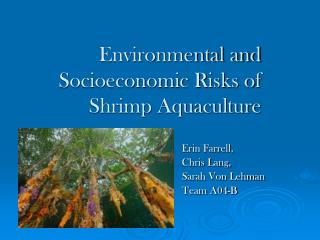 Environmental and Socioeconomic Risks of Shrimp Aquaculture