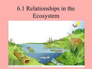 6.1 Relationships in the Ecosystem