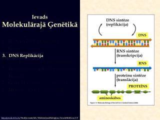 Ievads Molekularaja Genetika