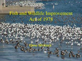 Fish and Wildlife Improvement Act of 1978