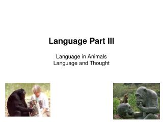 Language Part III  Language in Animals Language and Thought