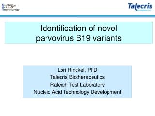 Identification of novel  parvovirus B19 variants