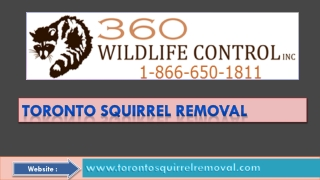Become Free Of Squirrel by Toronto Squirrel Removal Services