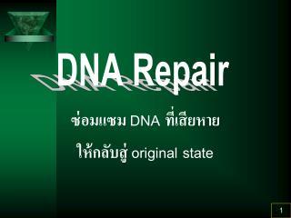 DNA    original state
