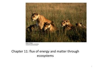 Chapter 11: flux of energy and matter through ecosystems