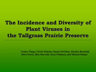 The Incidence and Diversity of Plant Viruses in  the Tallgrass Prairie Preserve