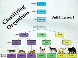 Classifying  Organisms