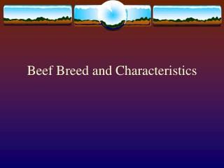 Beef Breed and Characteristics