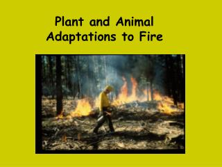 Plant and Animal Adaptations to Fire