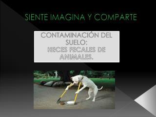 SIENTE IMAGINA Y COMPARTE