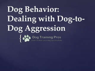 Dog Behavior: Dealing with Dog-to-Dog Aggression